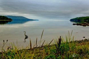 East Bay Heron